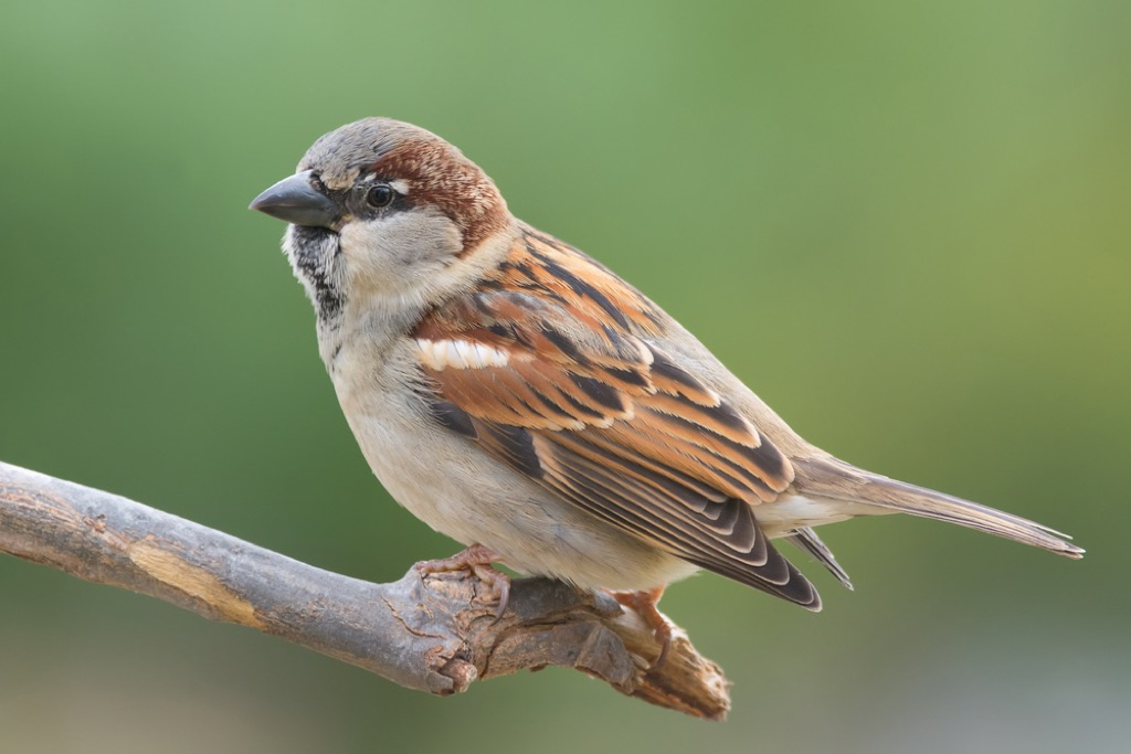 painting sparrows weirdest laws in every state