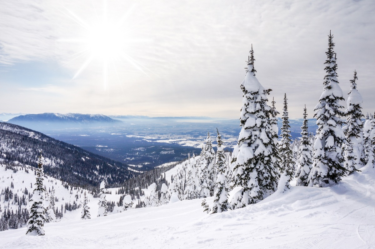 snow-covered trees on a mountain top