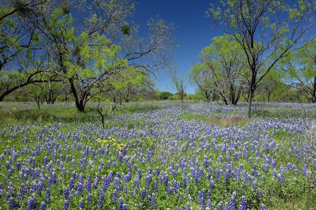 Willow City Bluebonnets Texas Magical Destinations