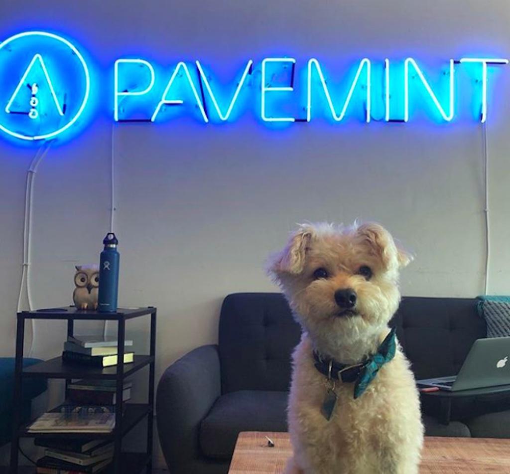 puppy in office