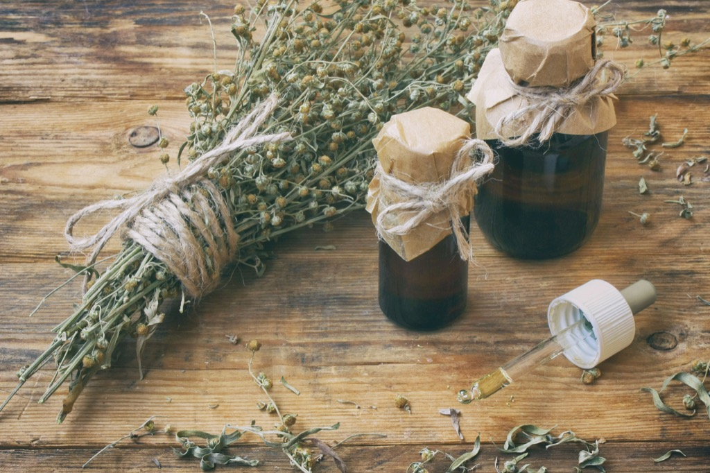 wormwood herb - historical facts