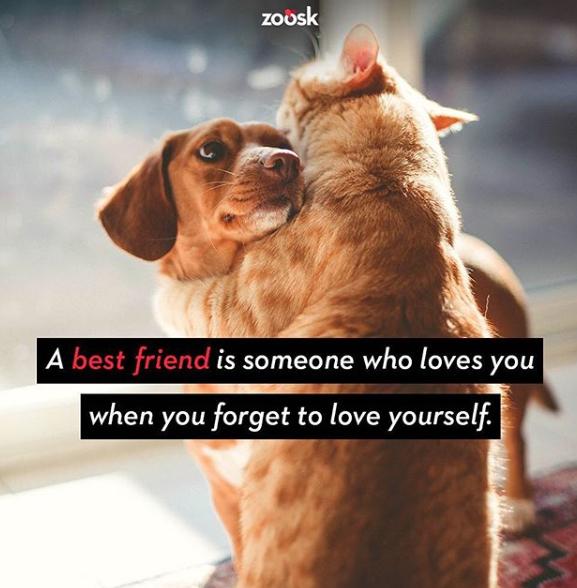 Zoosk pet-friendly companies
