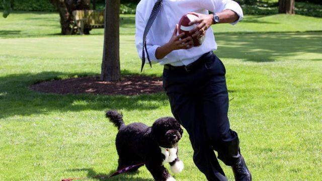 Bo Obama Pets Living the Good Life