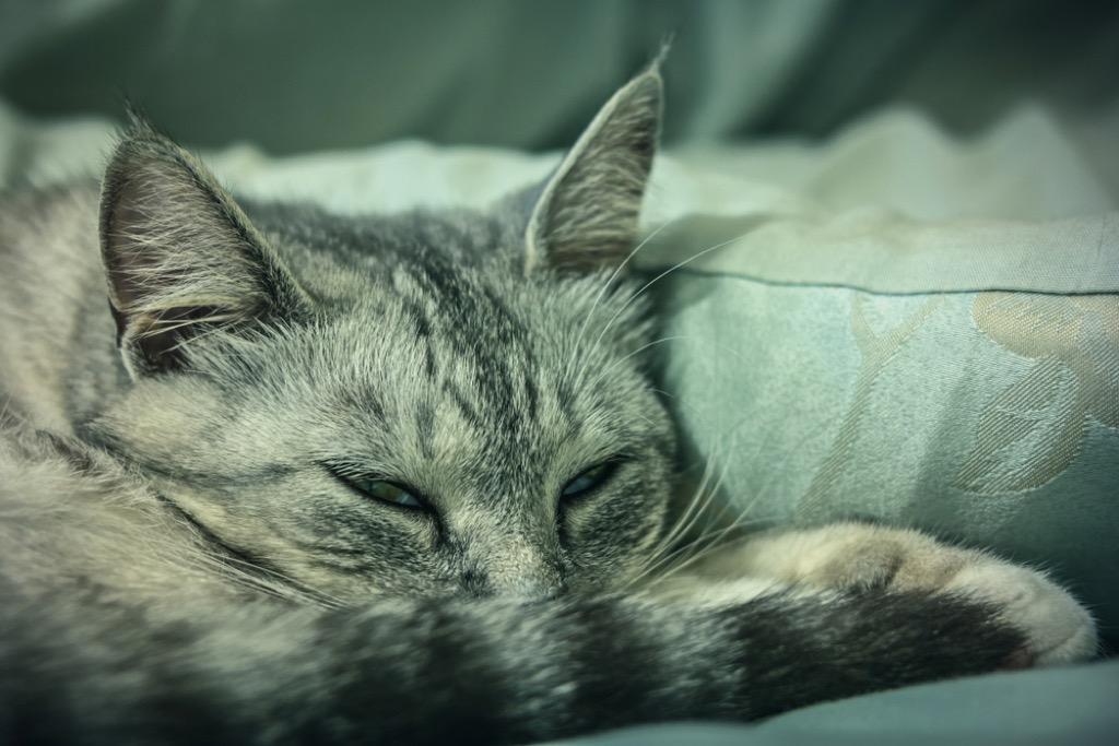 sleeping cat at night