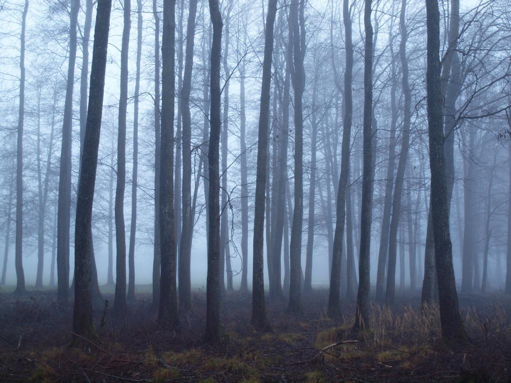 creepy forest weirdest urban legend every state