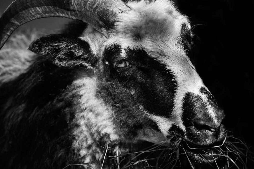 creepy goat weirdest urban legends every state