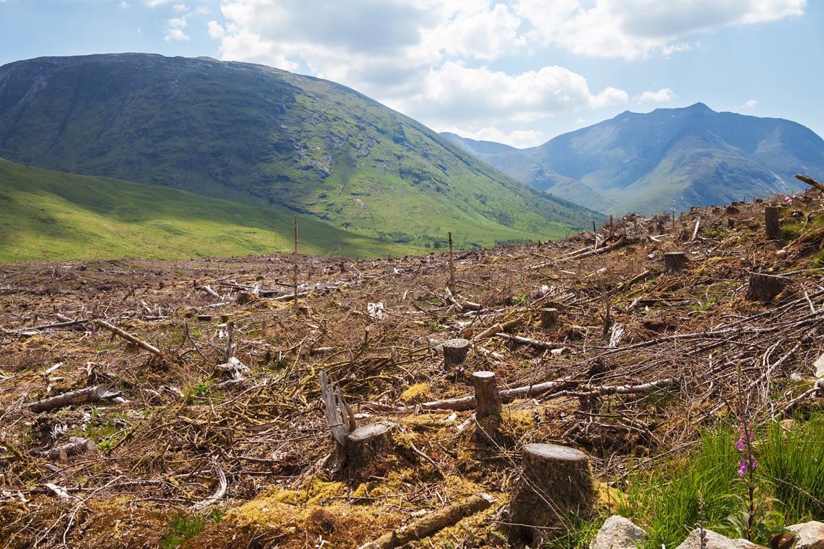 Deforestation Overpopulation