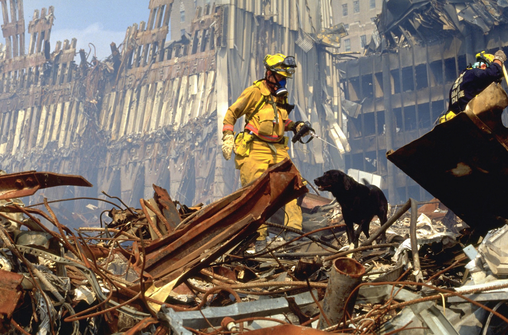 Dogs Who Helped with 9/11 Animals Who Are Real-Life Heroes