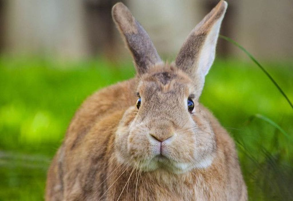 Dory the Rabbit Animals Who Are Real-Life Heroes