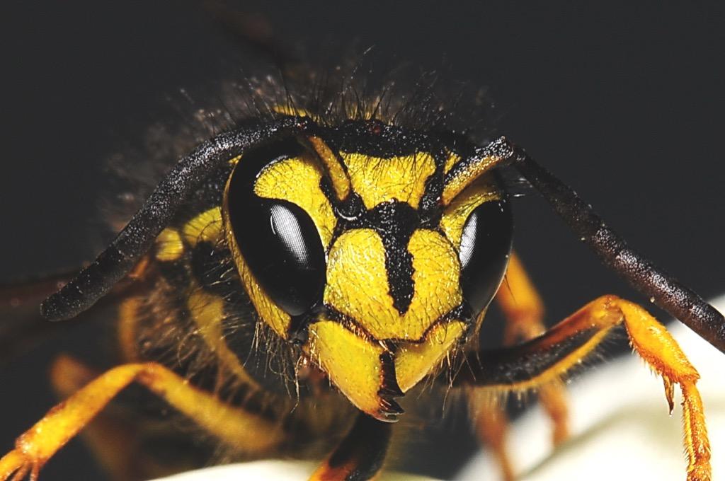 nebraska hornet weirdest urban legend every state