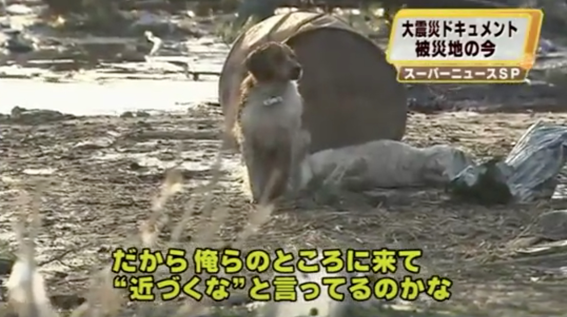 Japanese Rescue Dog Animals Who Are Real-Life Heroes