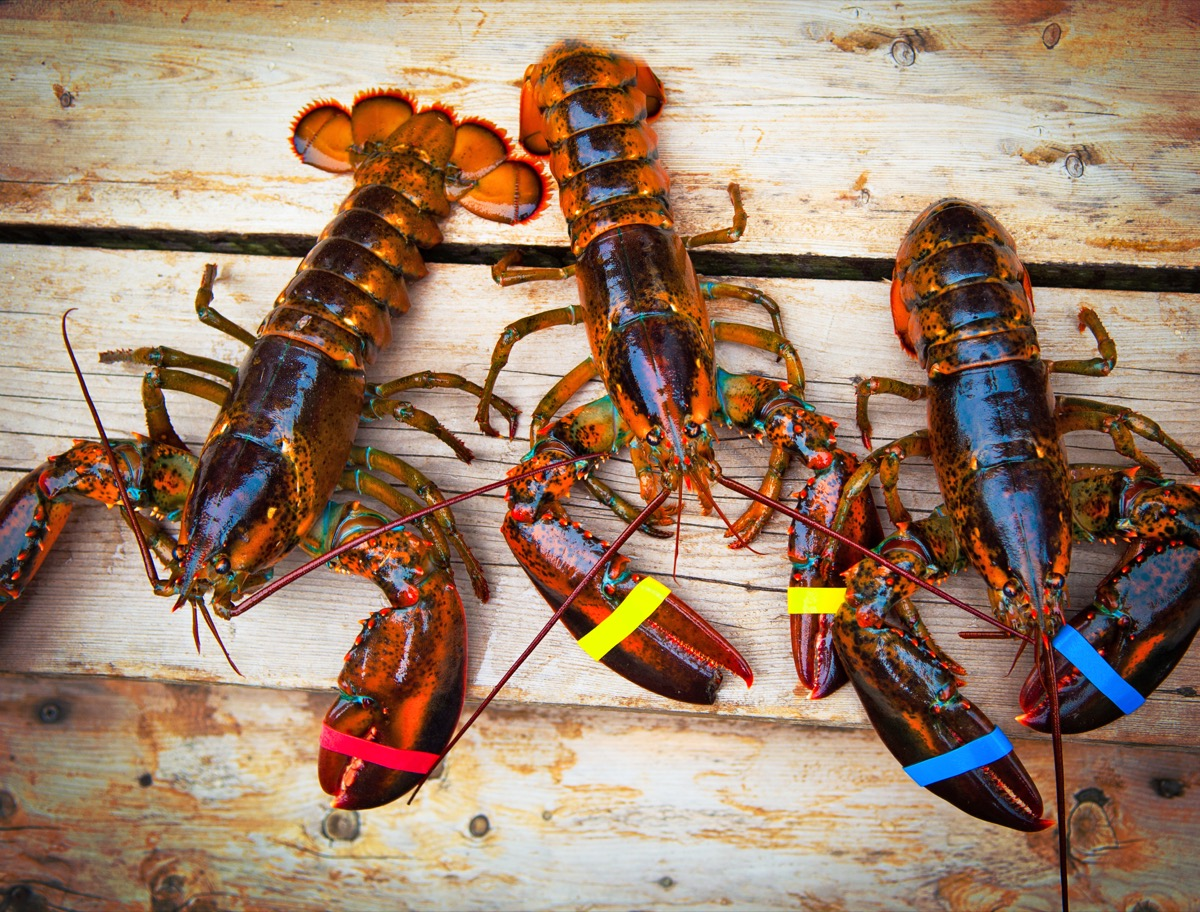 three lobsters on a wooden deck