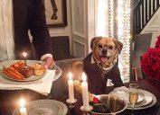 Lord Otis Pets Living the Good Life
