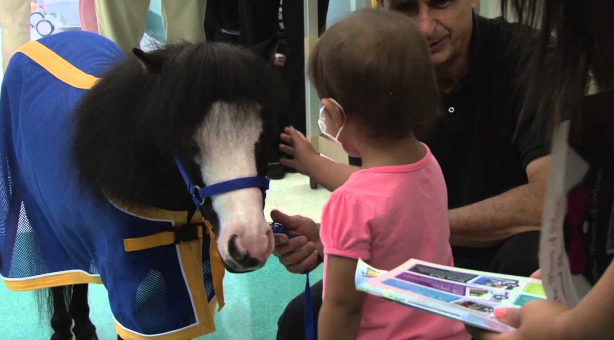 Magic the Miniature Mare Animals Who Are Real-Life Heroes