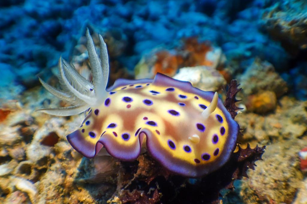 Sea slug, dangerous sea creatures