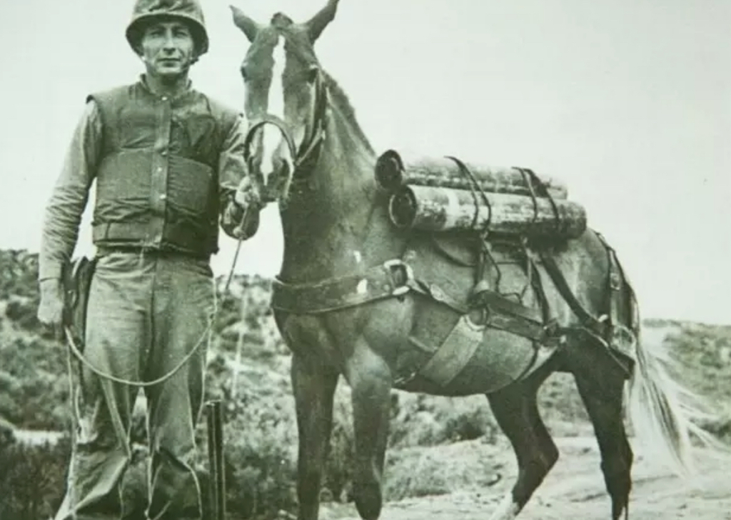 Sergeant Reckless Animals Who Are Real-Life Heroes