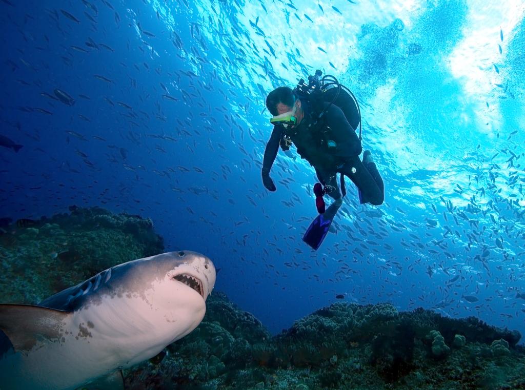 Shark Attack Aggressive