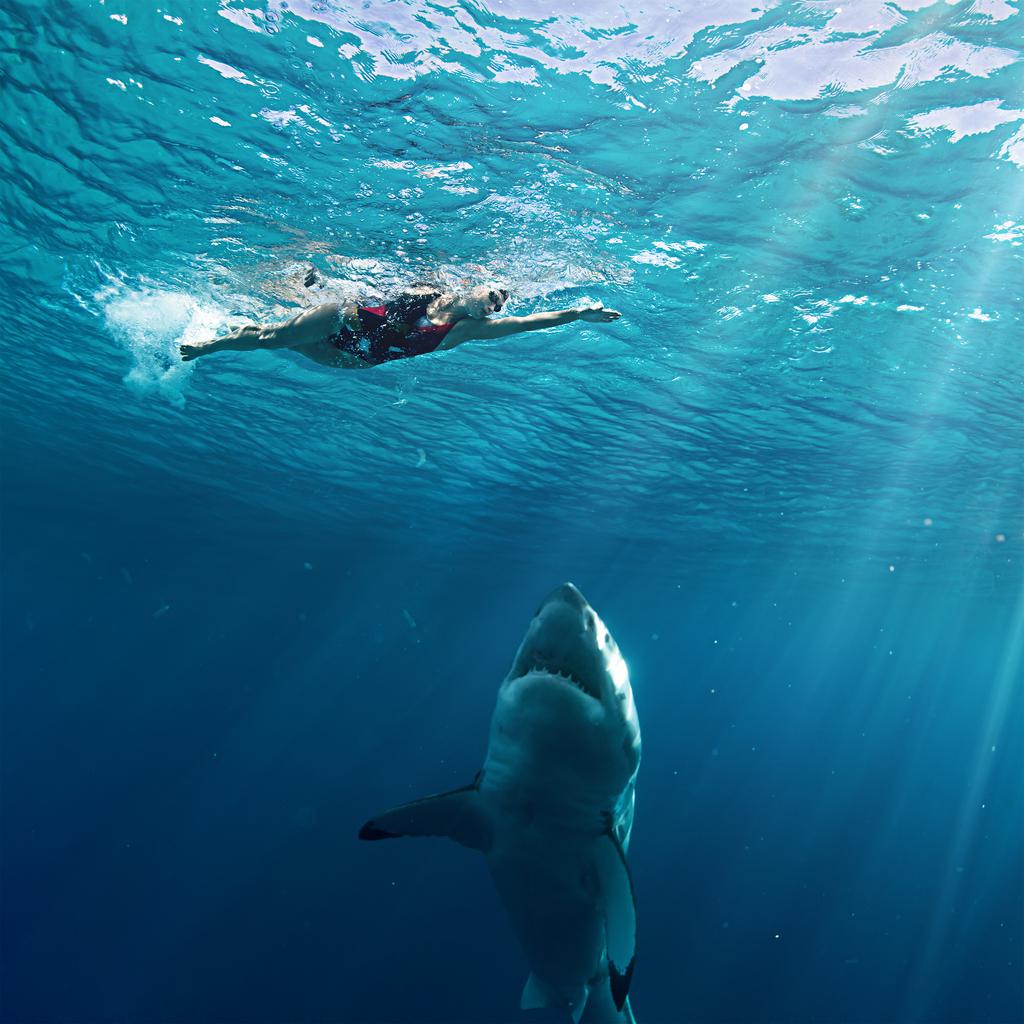 Shark Attack Swimmer