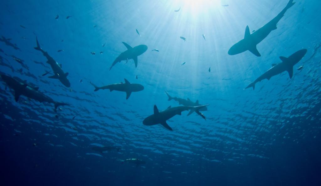 shark liter