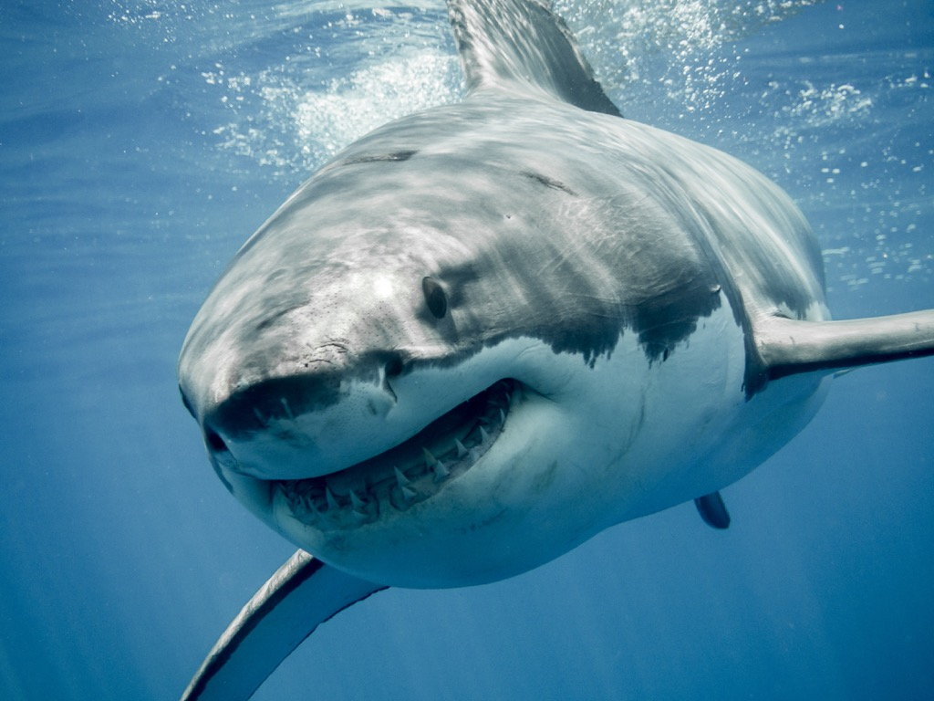 shark smiling 30 Things That Are Harder Than Getting into Harvard