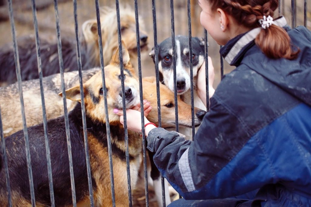 Woman petting dogs at animal shelter