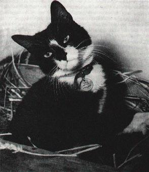 Simon the Cat Animals Who Are Real-Life Heroes