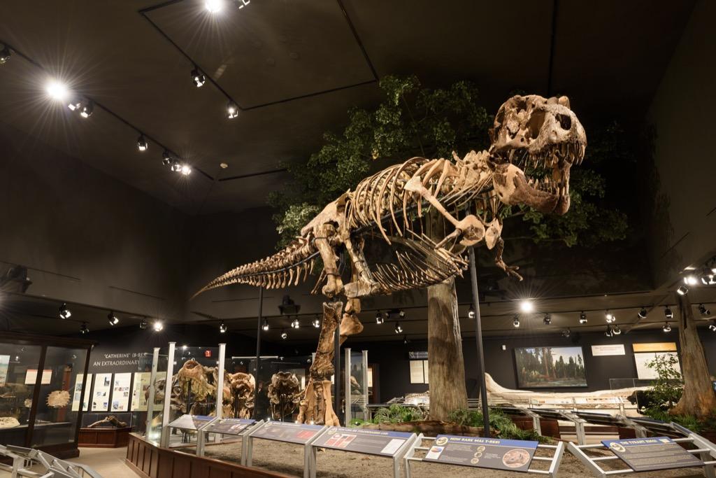 Tyrannosaurus Rex dinosaur skeleton in museum