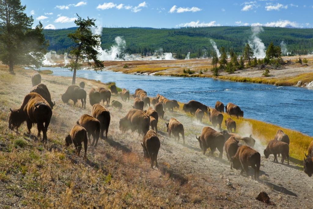 yellowstone national park most historic location in every state