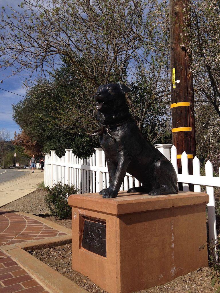 Bosco mayor dog