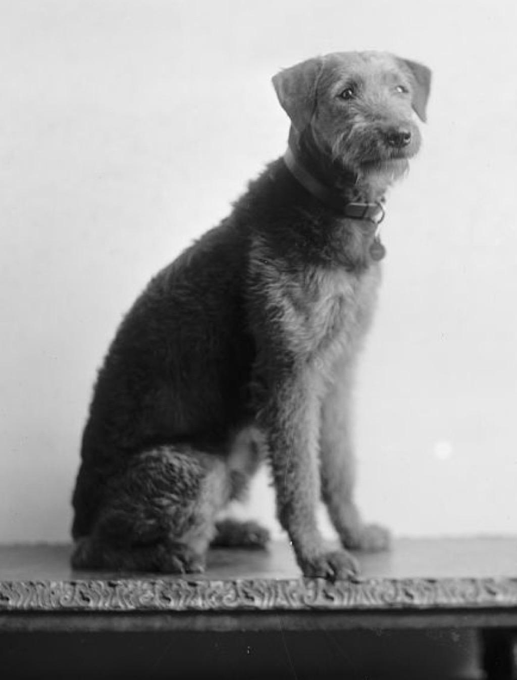 Warren G Harding's dog, Laddie boy