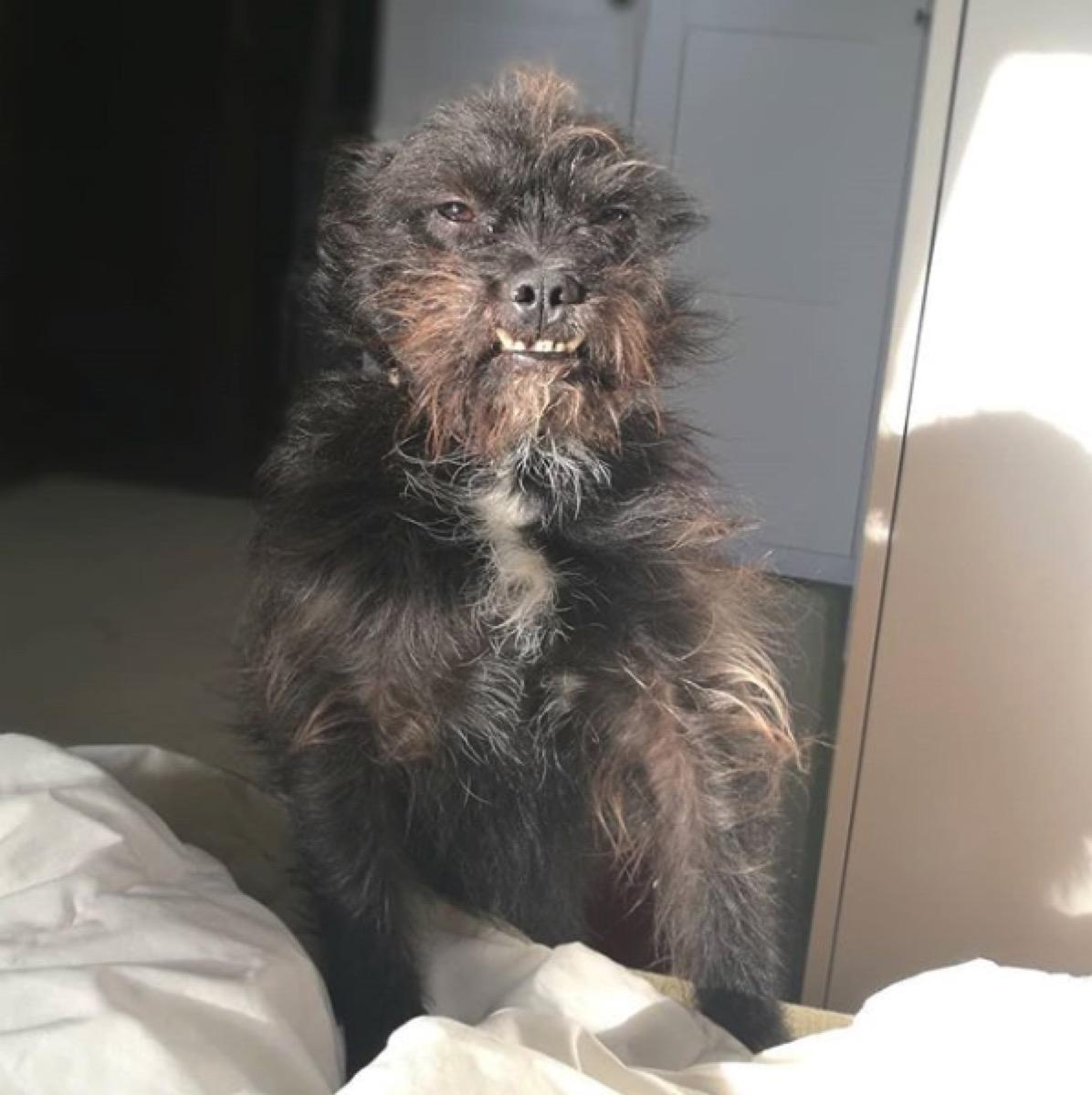 Töki Kutya ugly dog