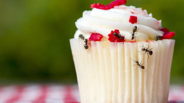 ants on cupcake home problems