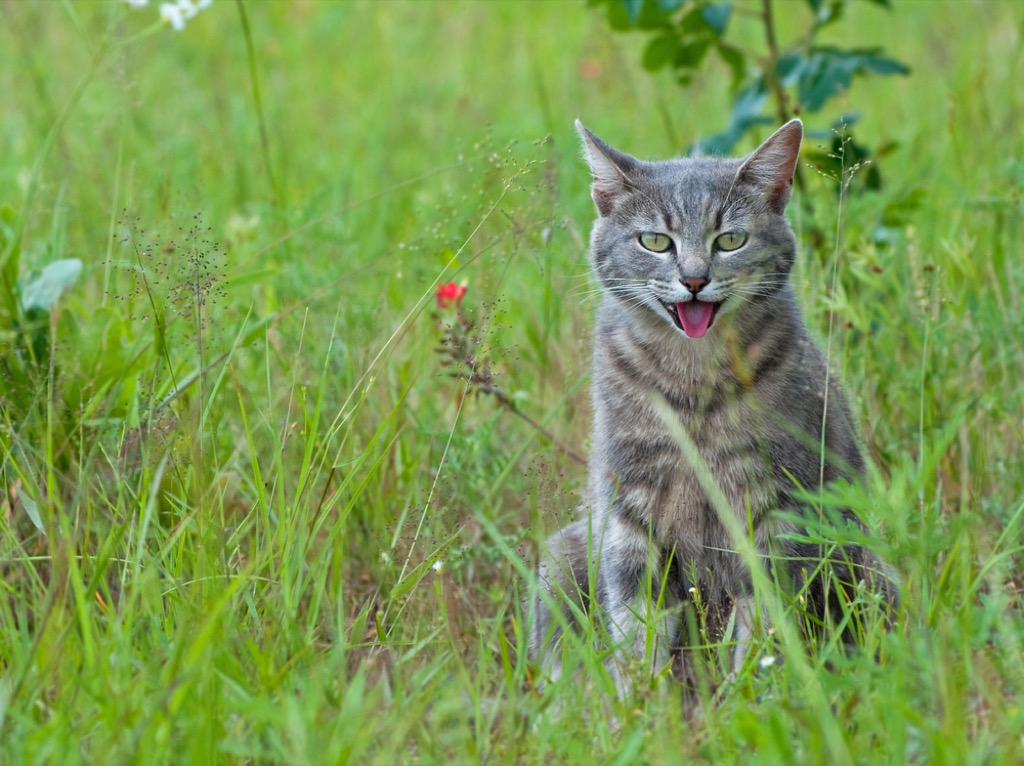 panting cat signs your cat is sick