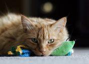 depressed cat signs your cat is sick