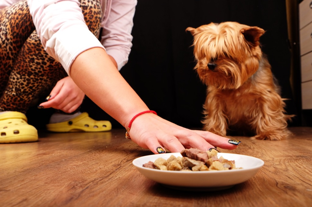 Dog is not hungry and refuses to eat his food