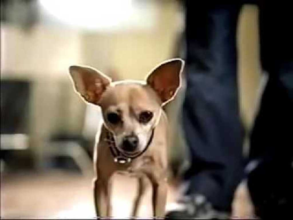 Gidget taco bell dog