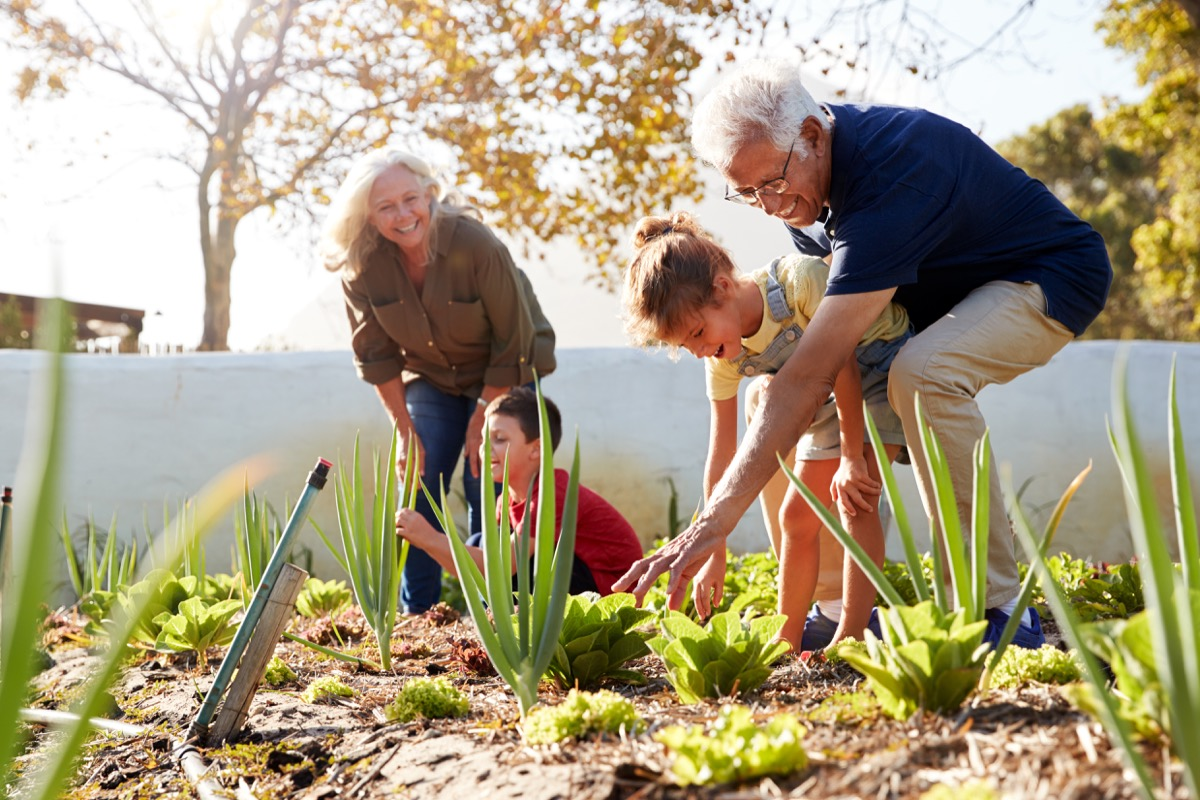 Grandparents planting in the garden with their grandkids