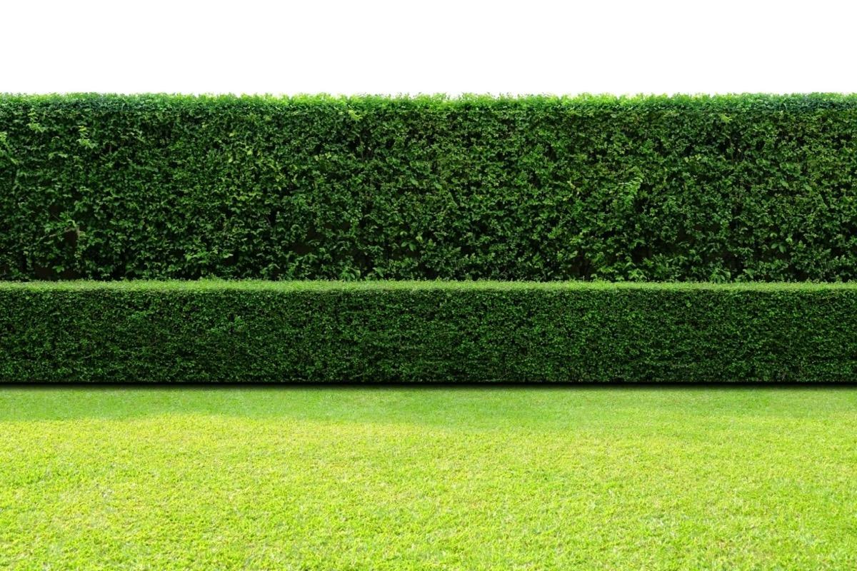 green hedge in yard