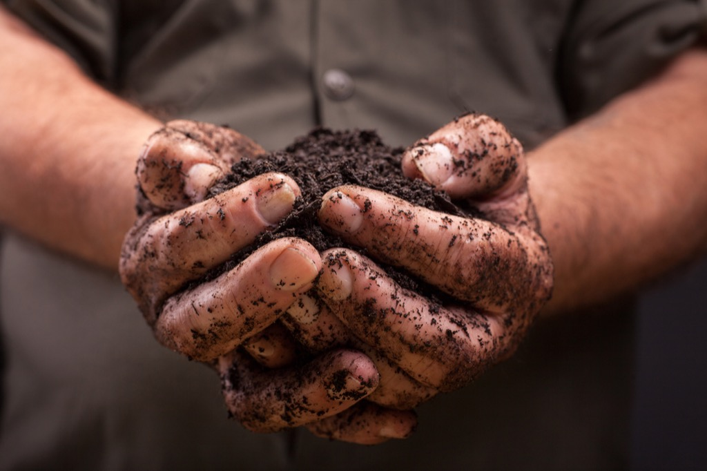 Person holding a pile of dirt