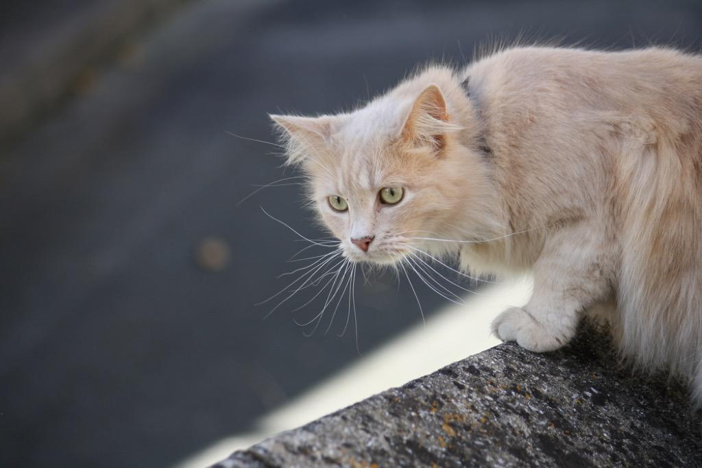 cat hunching over