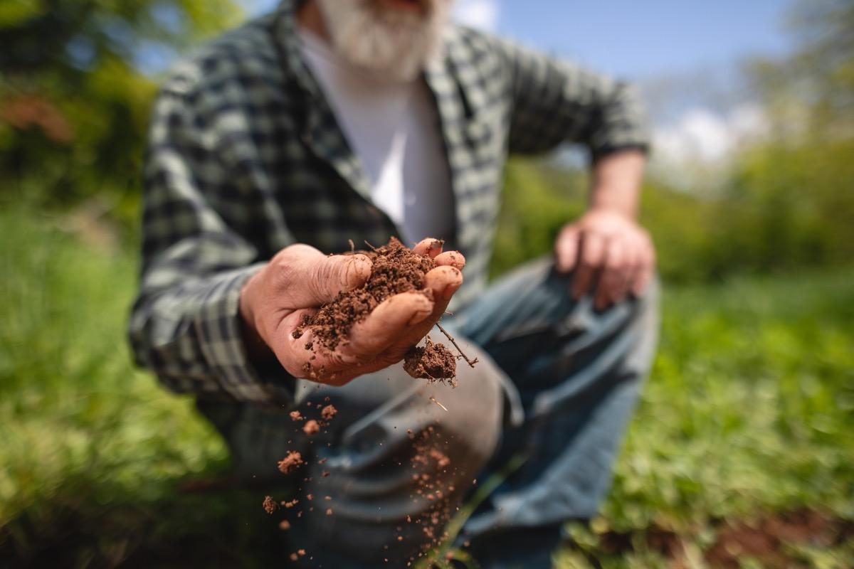 Senior man examining his soil