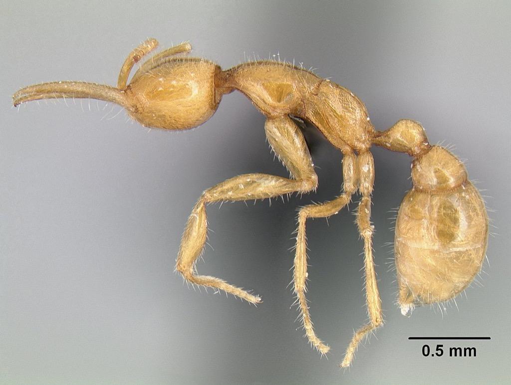 Martialis Huereka 30 oldest animals on earth