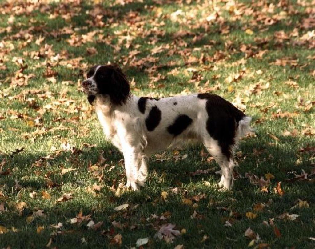 George HW Bush's dog, Millie