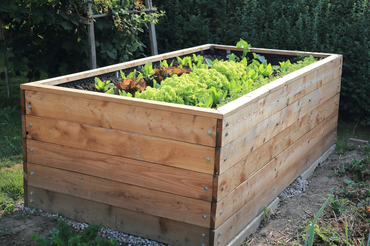 raised bed in garden