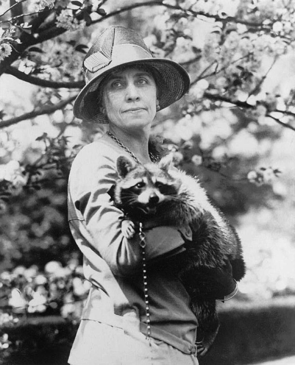 Calvin Coolidge's raccoon, Rebecca