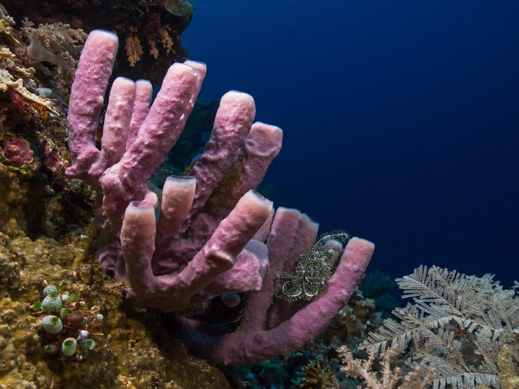 sea sponge 30 oldest animals on earth