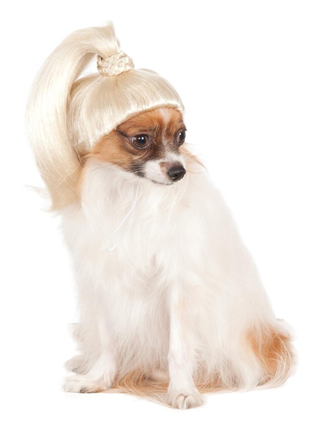 dog ponytail craziest Amazon products