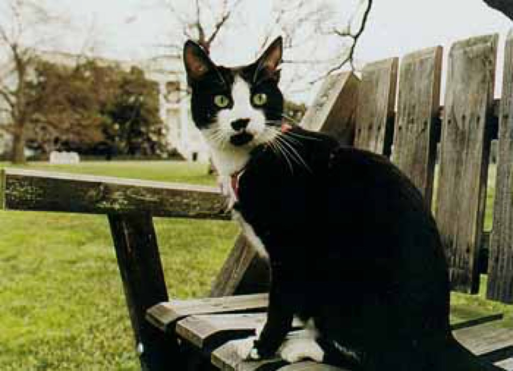 Bill Clinton's cat, Socks