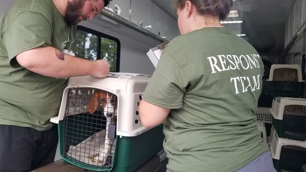 how to help pets in a hurricane
