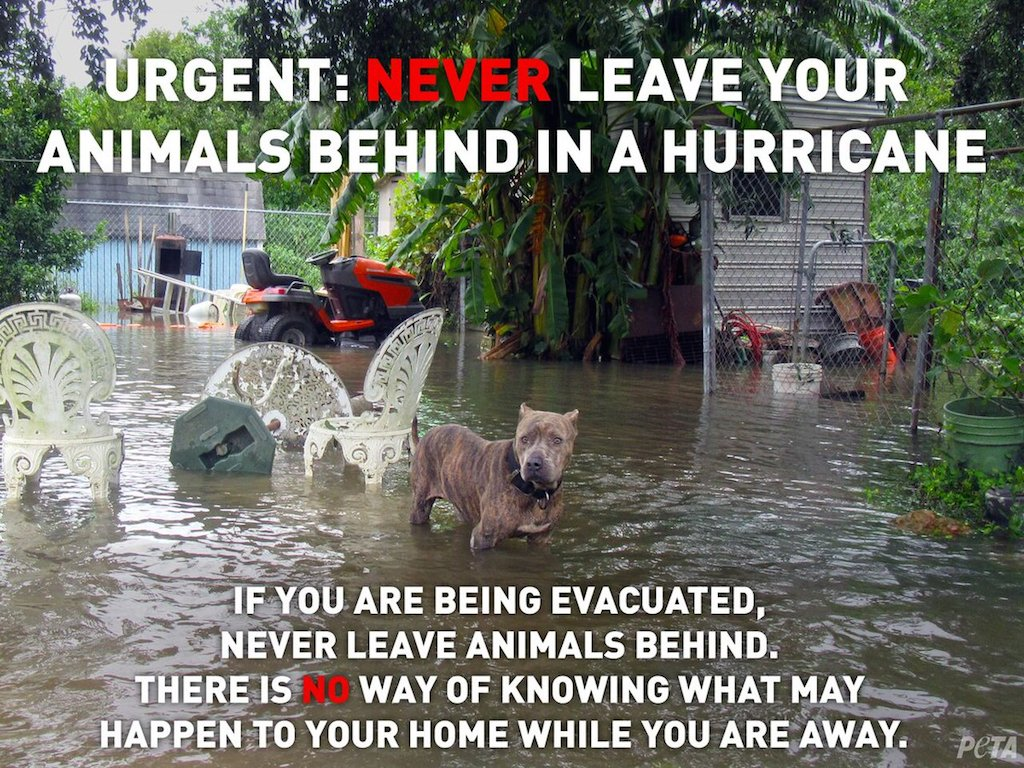 how to keep pets safe in a hurricane